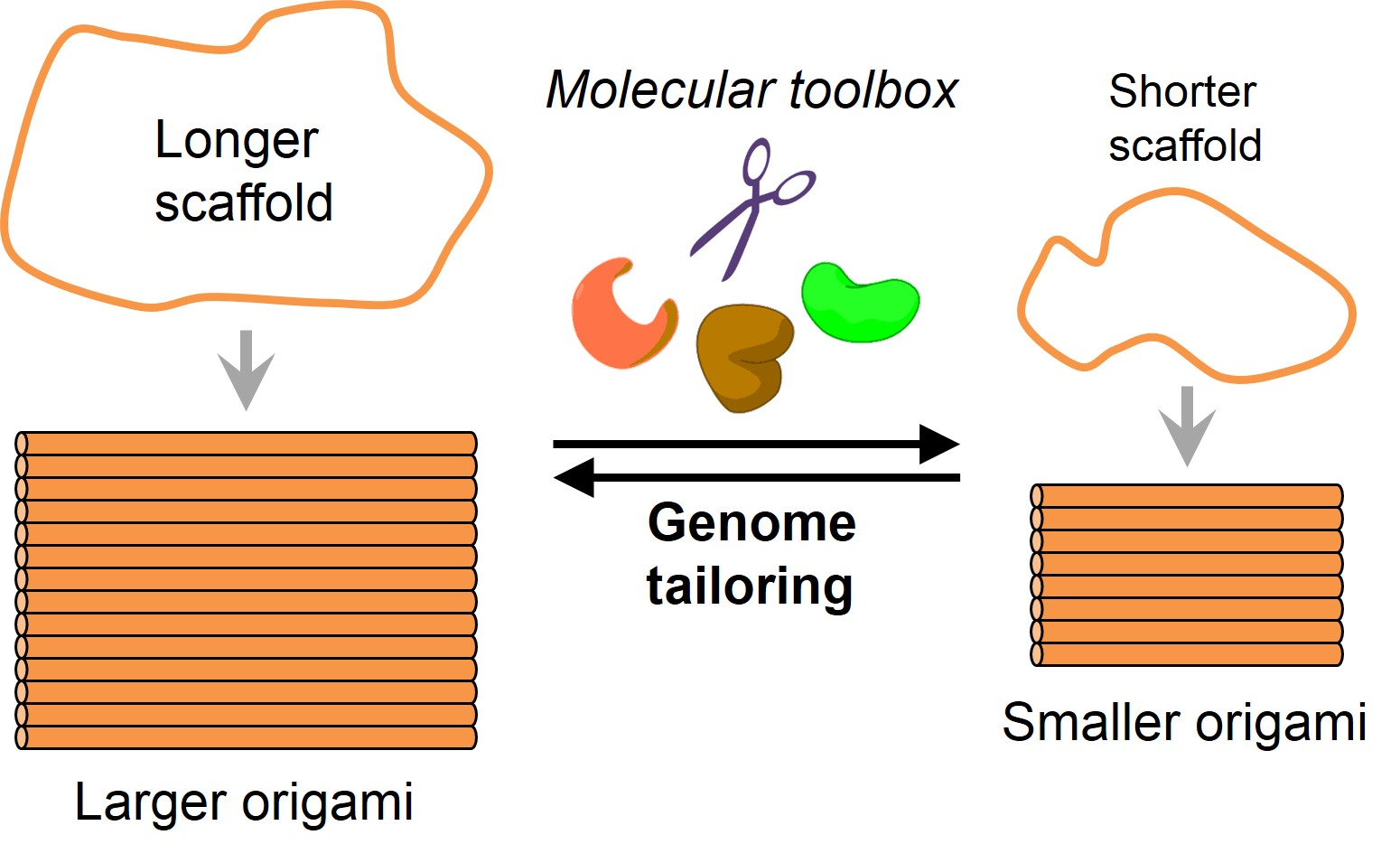 DNA origami scaffolds.jpg