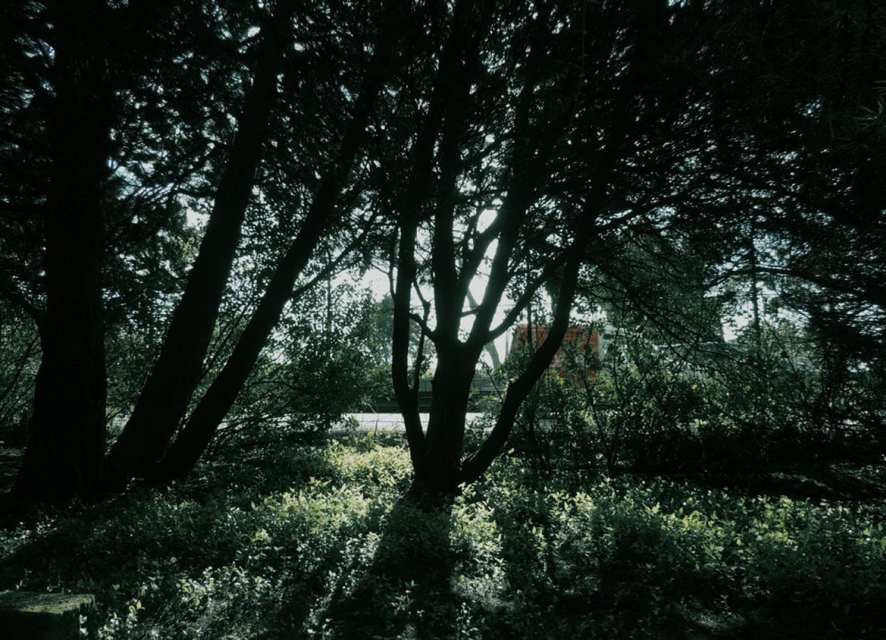 selva-urbana-7.jpg