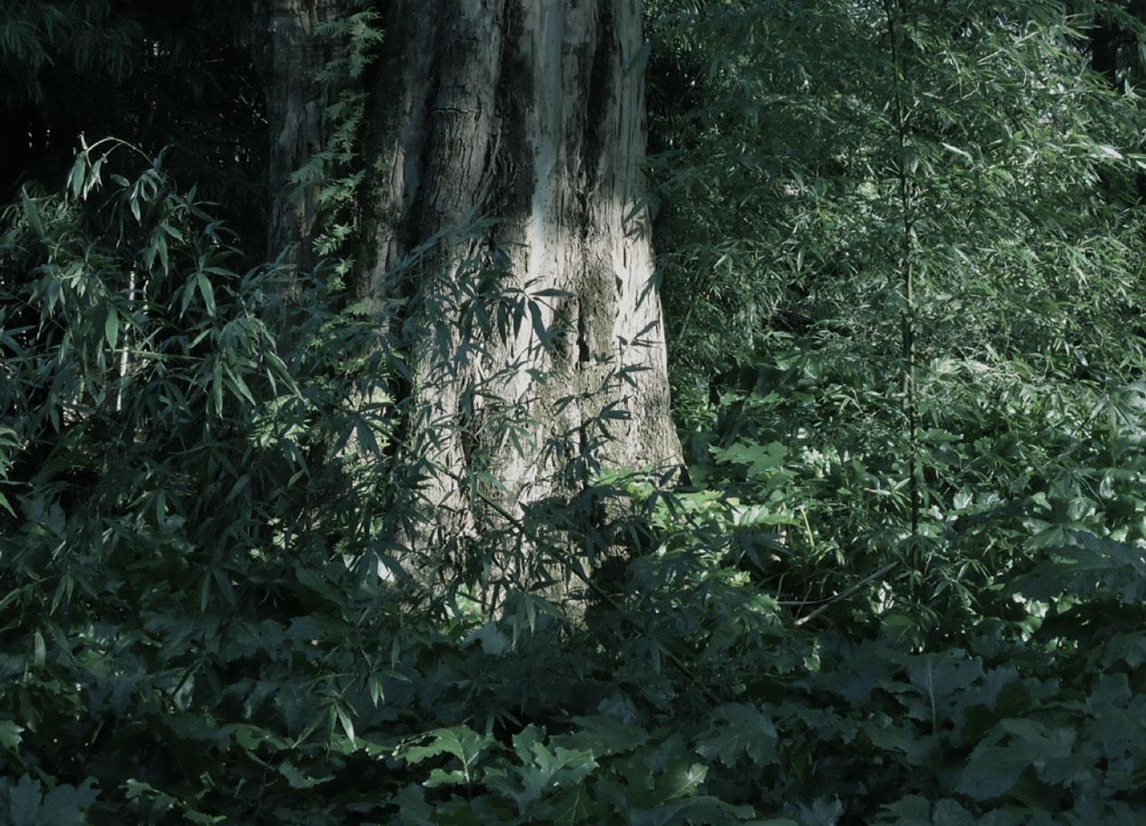 selva-urbana-13.jpg