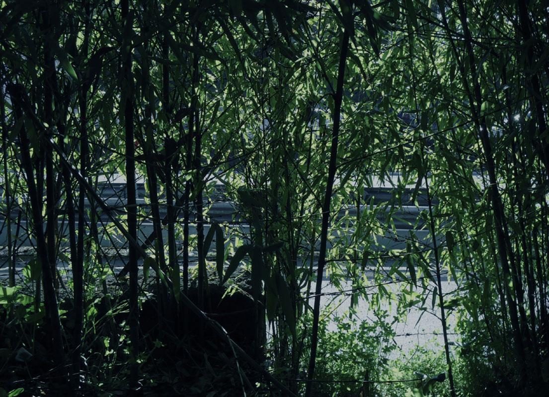 selva-urbana-17.jpg