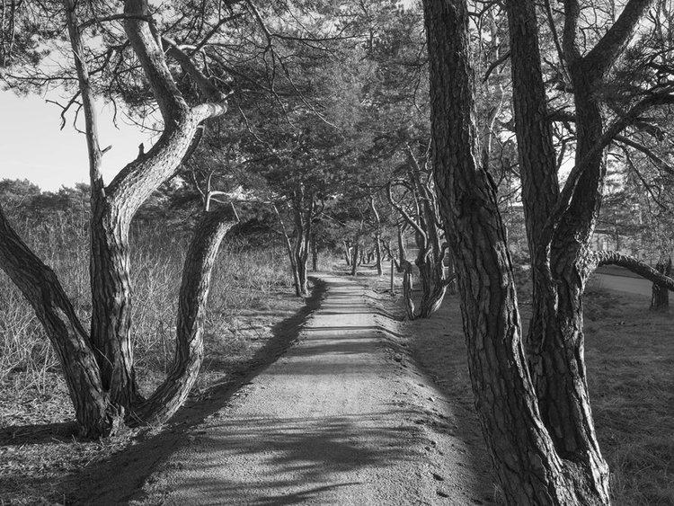 walk_150226.jpg
