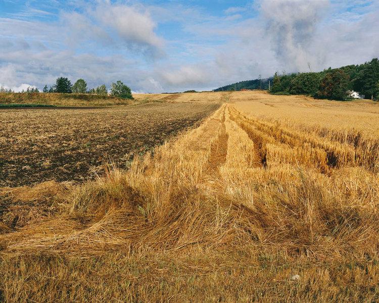 7_hay-field.jpg