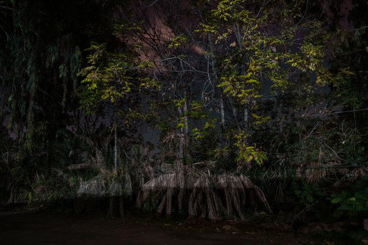 dark_tree-1.jpg