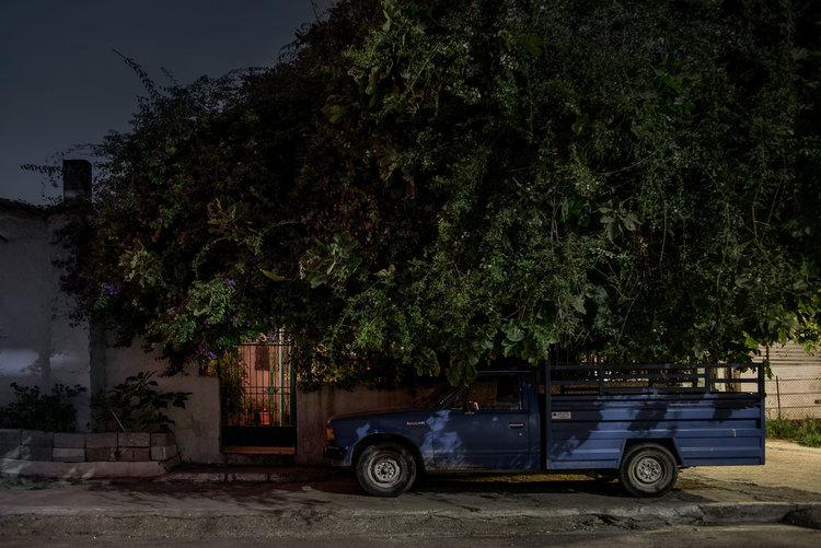 dark_tree-5.jpg
