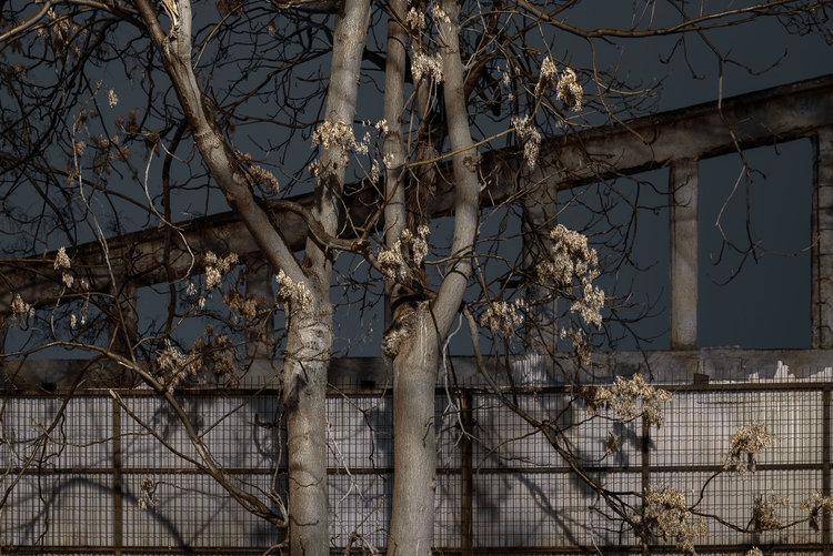 dark_tree-11.jpg