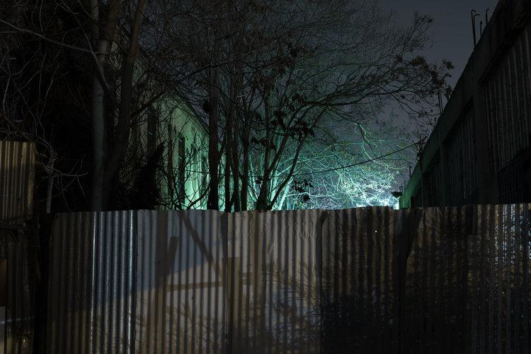 dark_tree-12.jpg