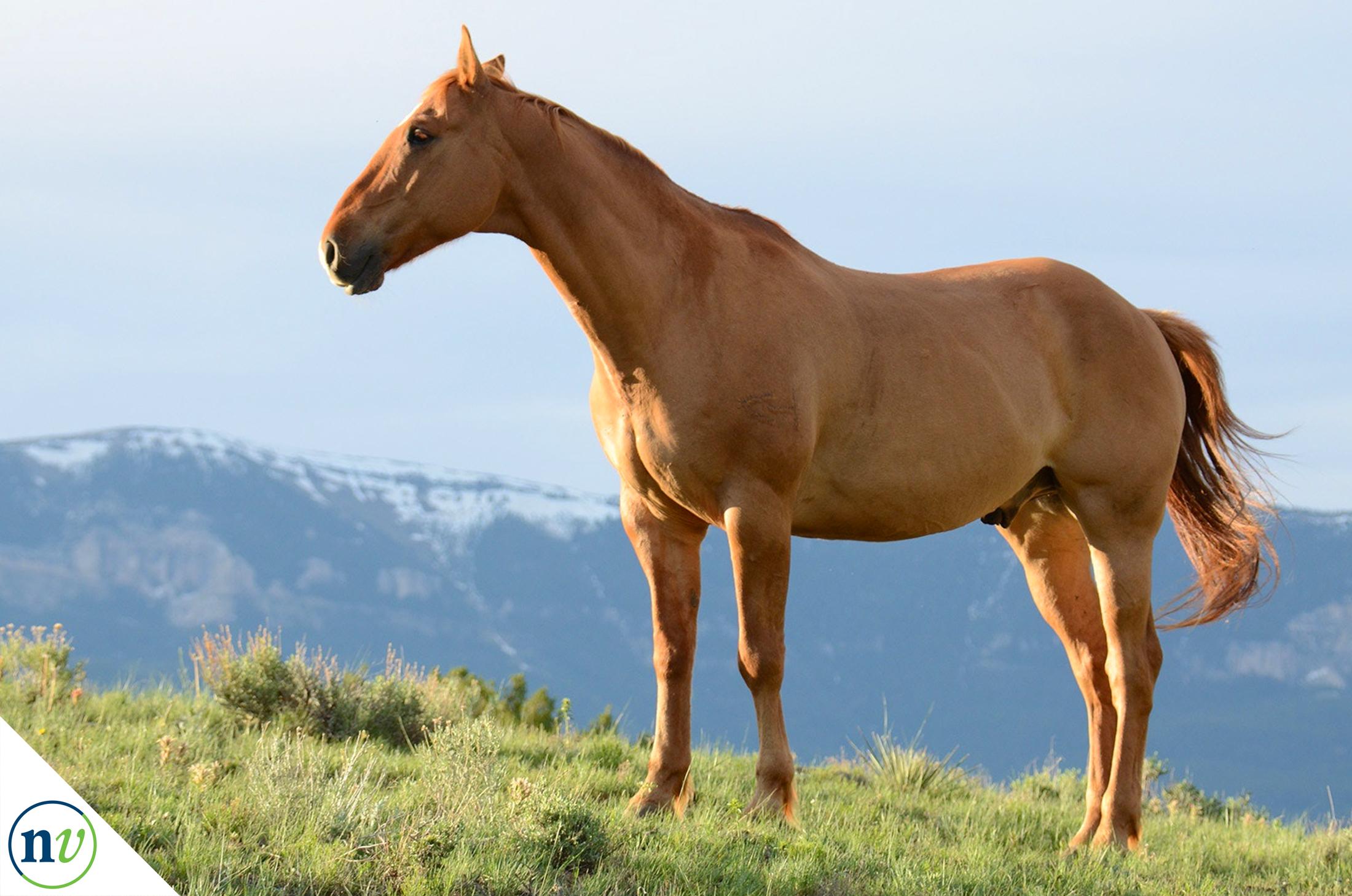 NostrilVet_horse_on_hill.jpg