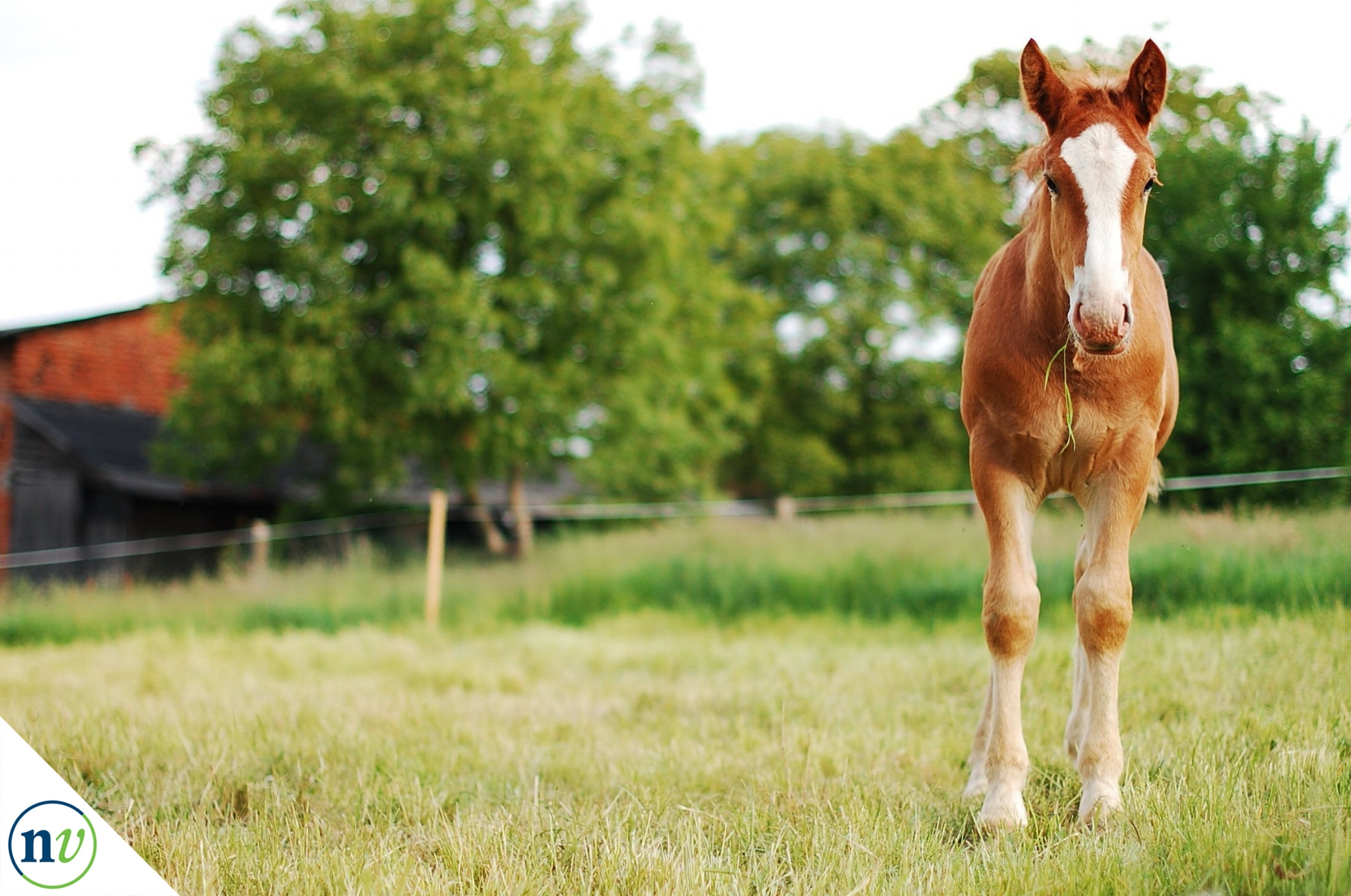 NostrilVet_horse_eating_grass.jpg