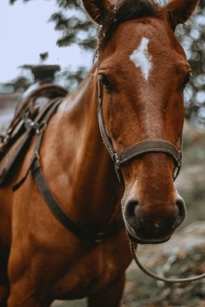 Sombrero Ranches - The Rockies on horseback! Since 1958, Sombrero Ranches has grown Colorado's western heritage for all levels of riders in every season. Ride a trail in the high country and look for elk, deer, and coyote. The steak dinner rides are a favorite!