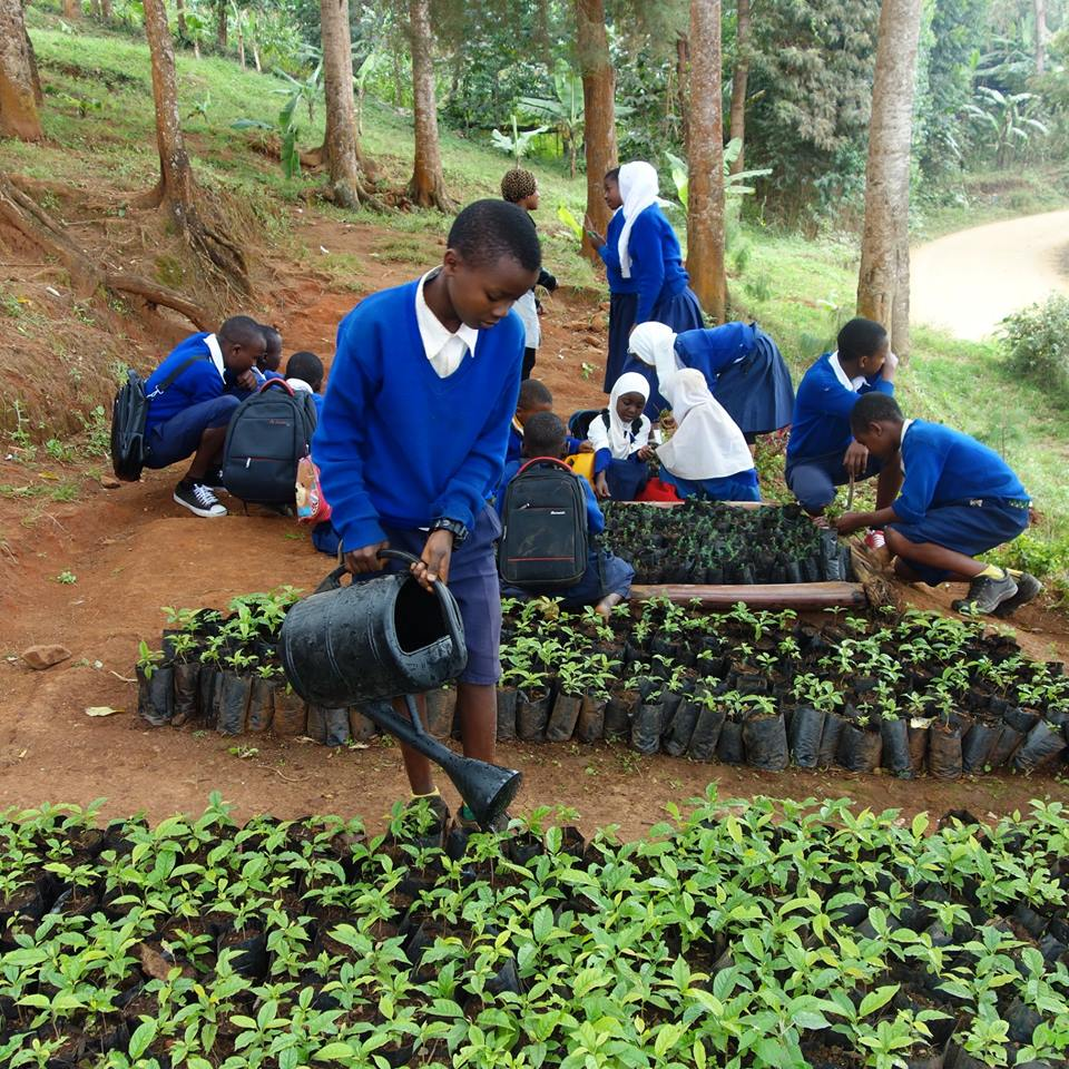 Planting 5 Trees for Every Bottle - Our Commitment To You