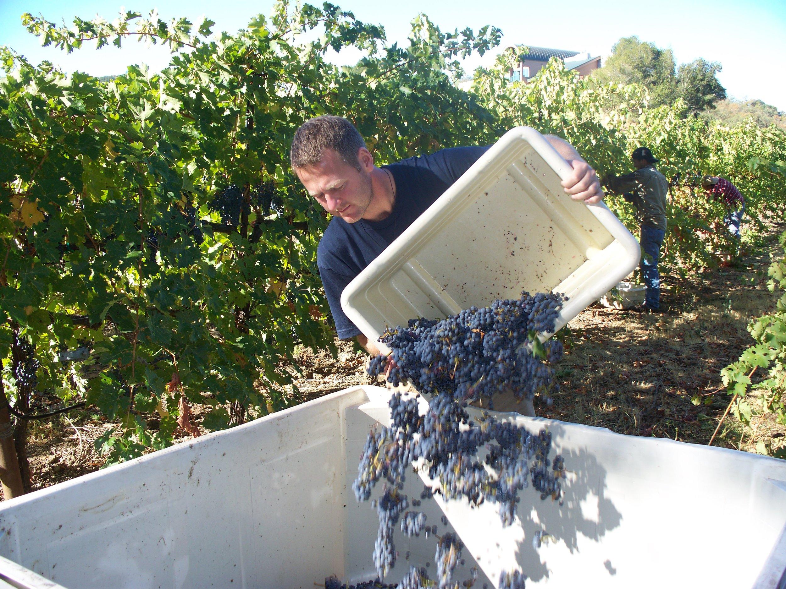 Harvest 08 011.jpg
