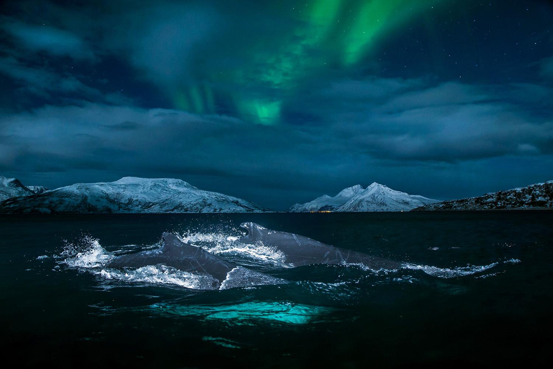 whale-northern light.jpg