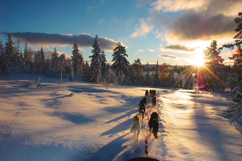 dogsledging-winter-Adventure-Travel-Norway-kopi.jpg