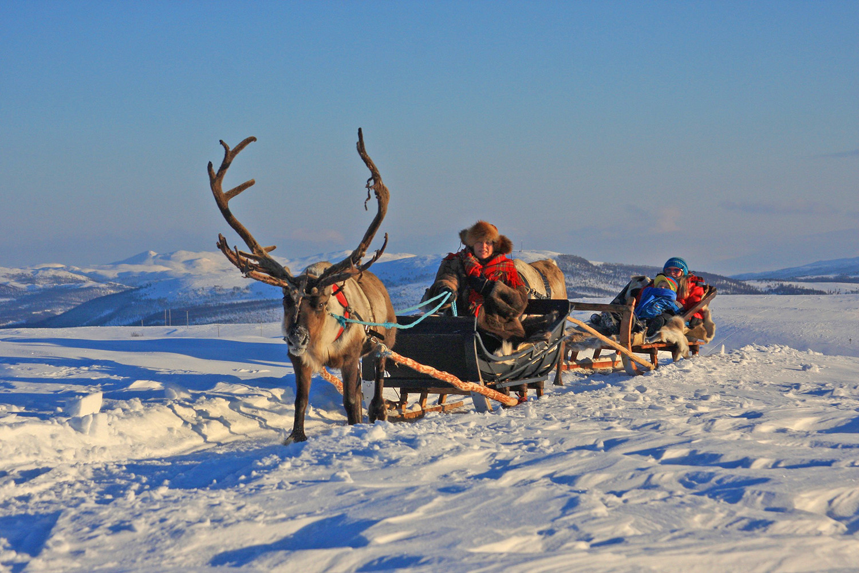 reindeer-sledging-kopi.jpg