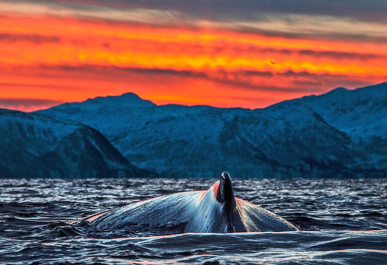 whale-fjords-kopi.jpg