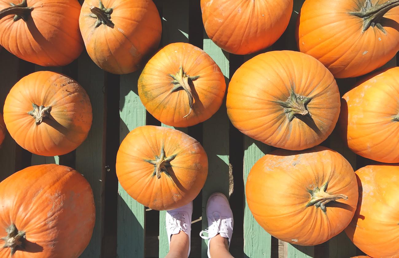 lesventsdange-pumpkin.jpg