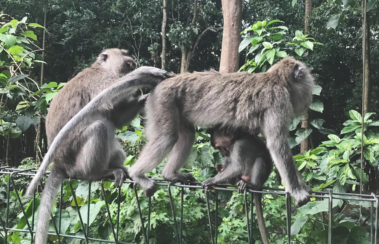 monkeyforest.jpg