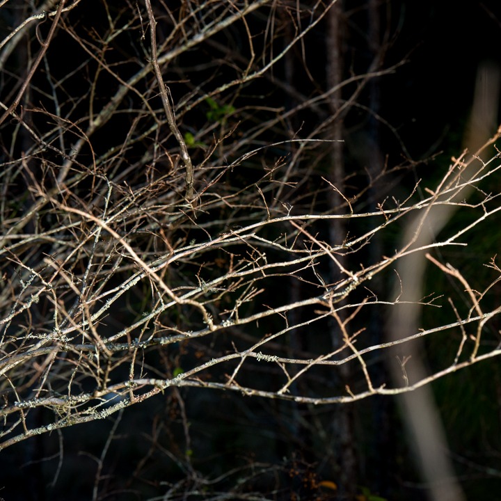 Twigs Sticks and Branches