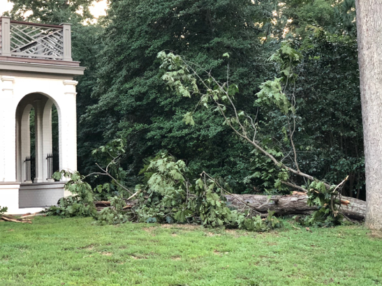 Fallen_Tree_Richmond_Virginia.png