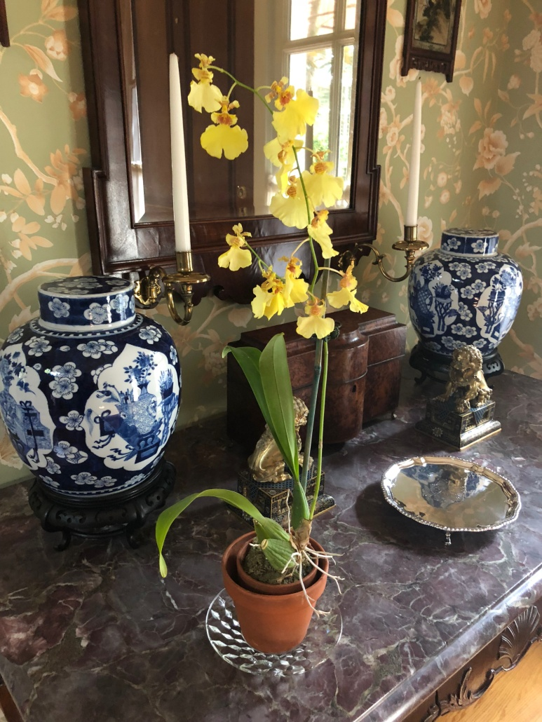 Yellow_Orchid_Blue_White_Porcelain