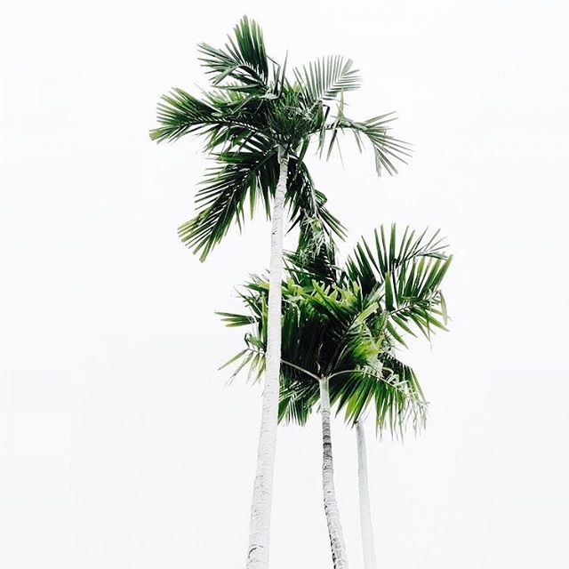 Summer inspiration via Pinterest.. I think I need to start making little silver palm trees! 💭🌴