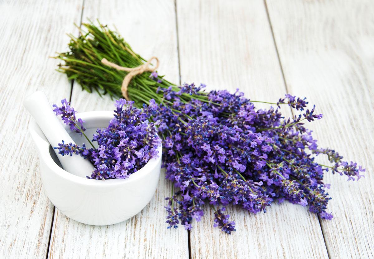 Organic Ingredients Beauty