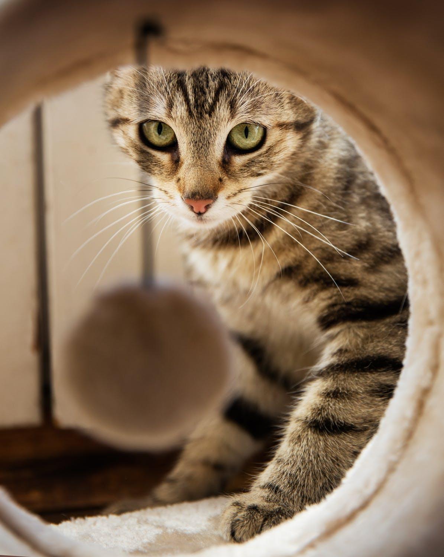 UVG Image Bank - Cat 45.jpeg