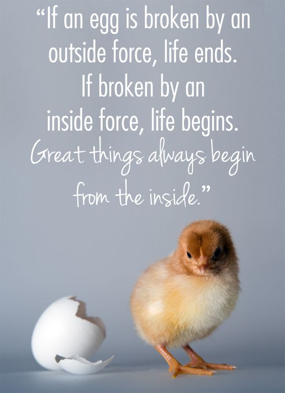 egg-begins.jpg
