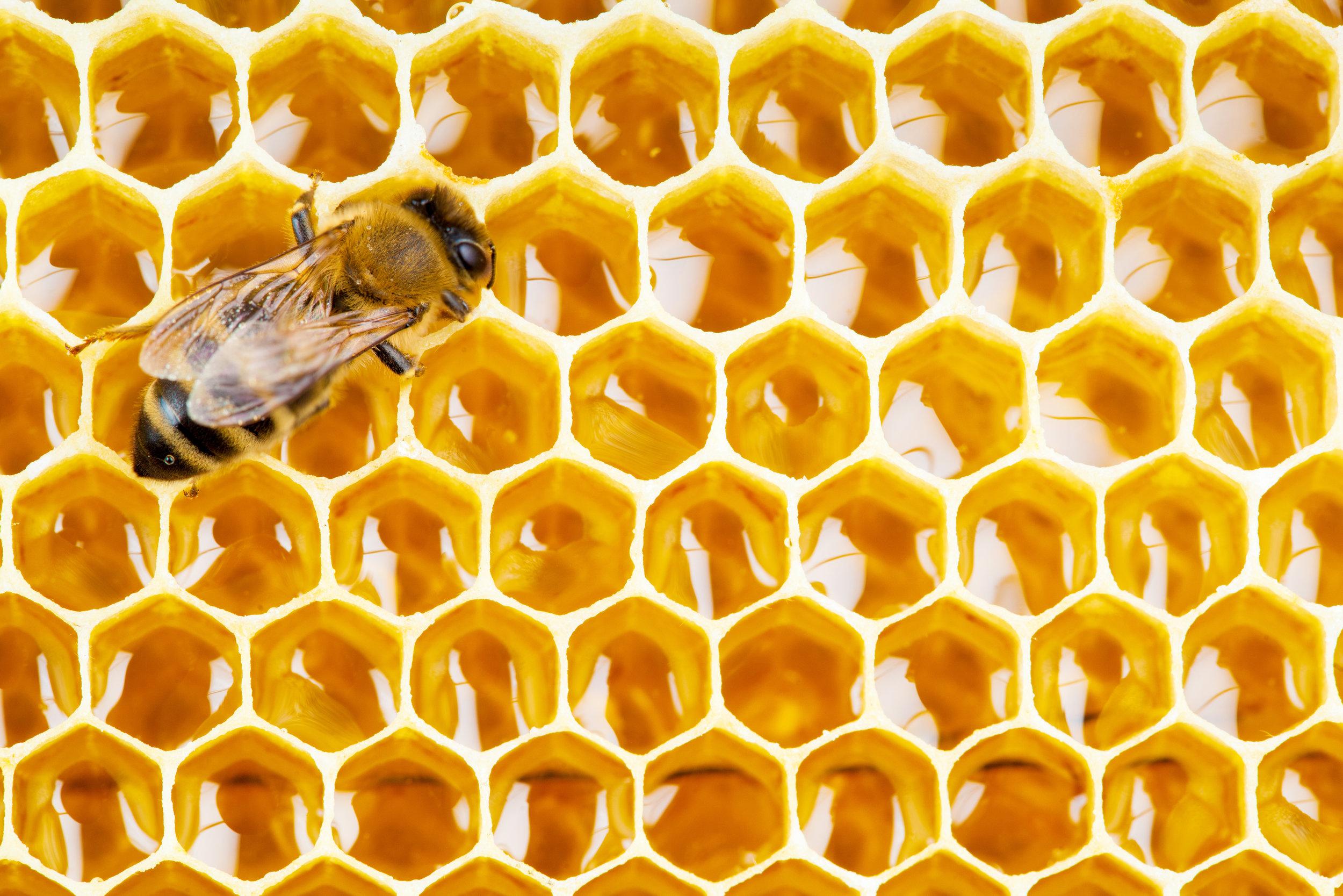A really Cute Bee