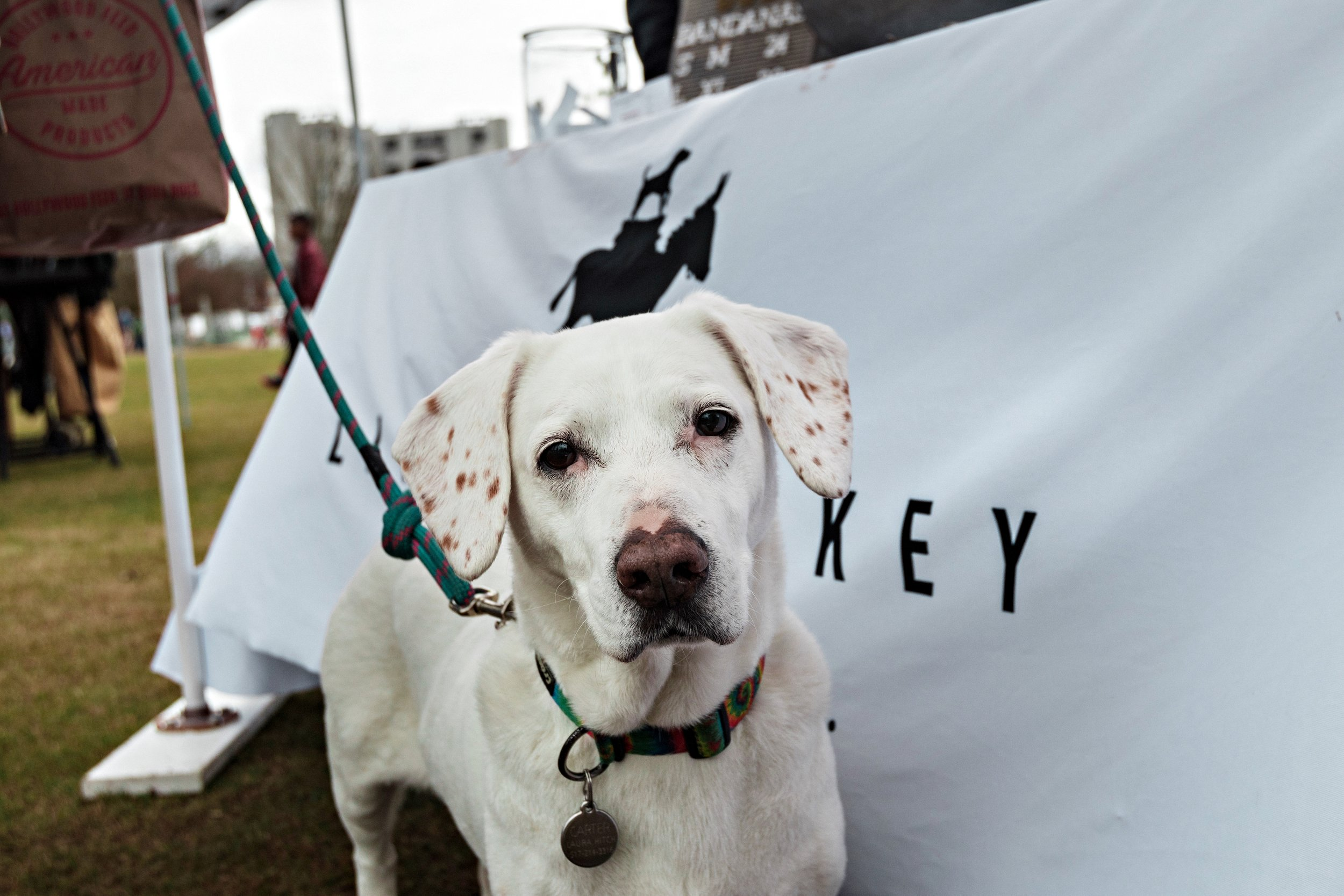 Atlanta Dog Festival
