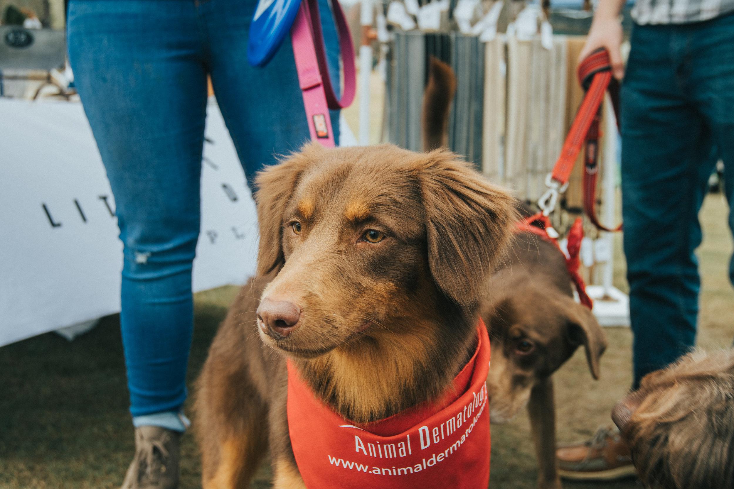 Rescue Dog Games 2019