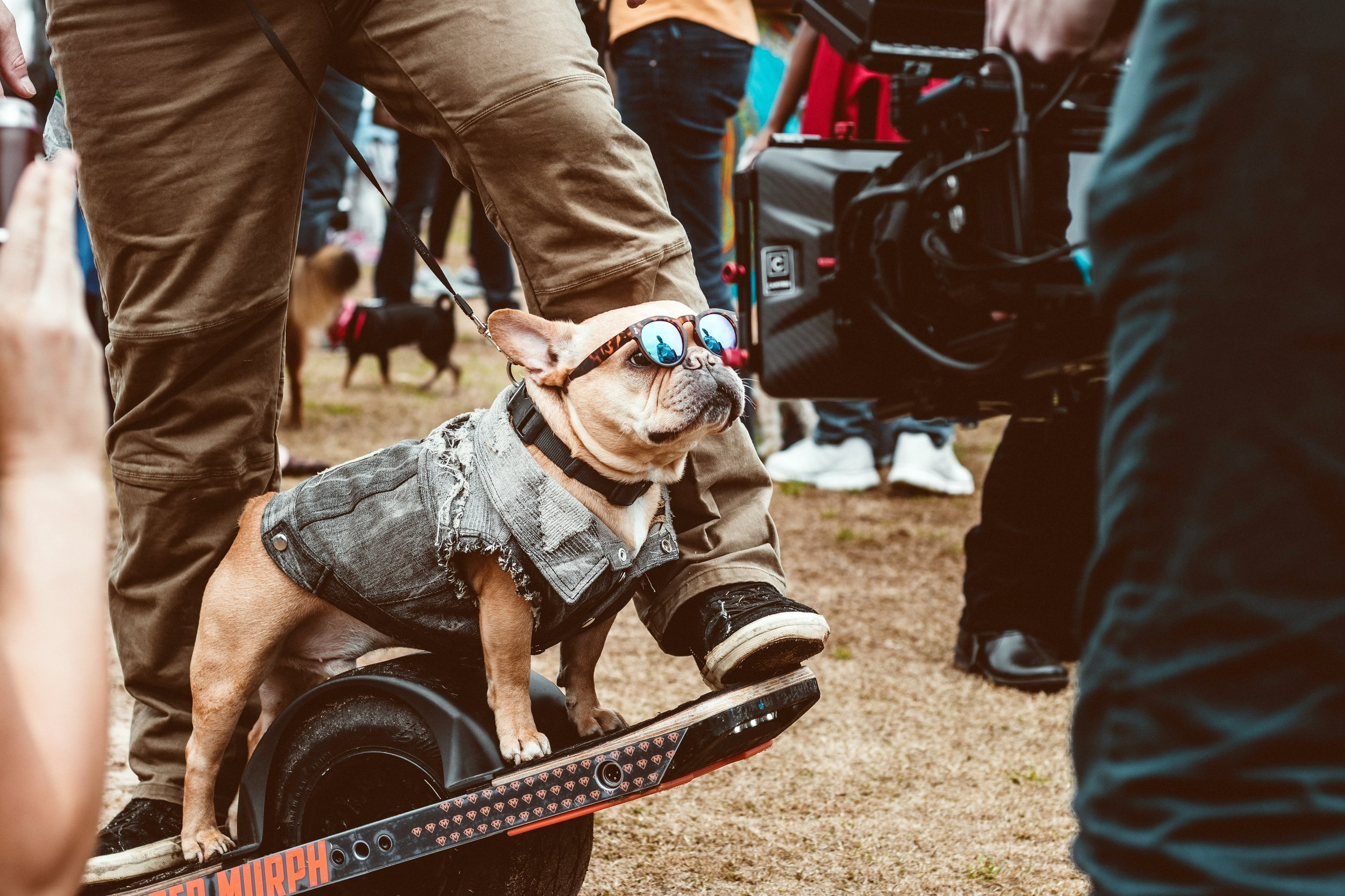 Badass Skater Dog