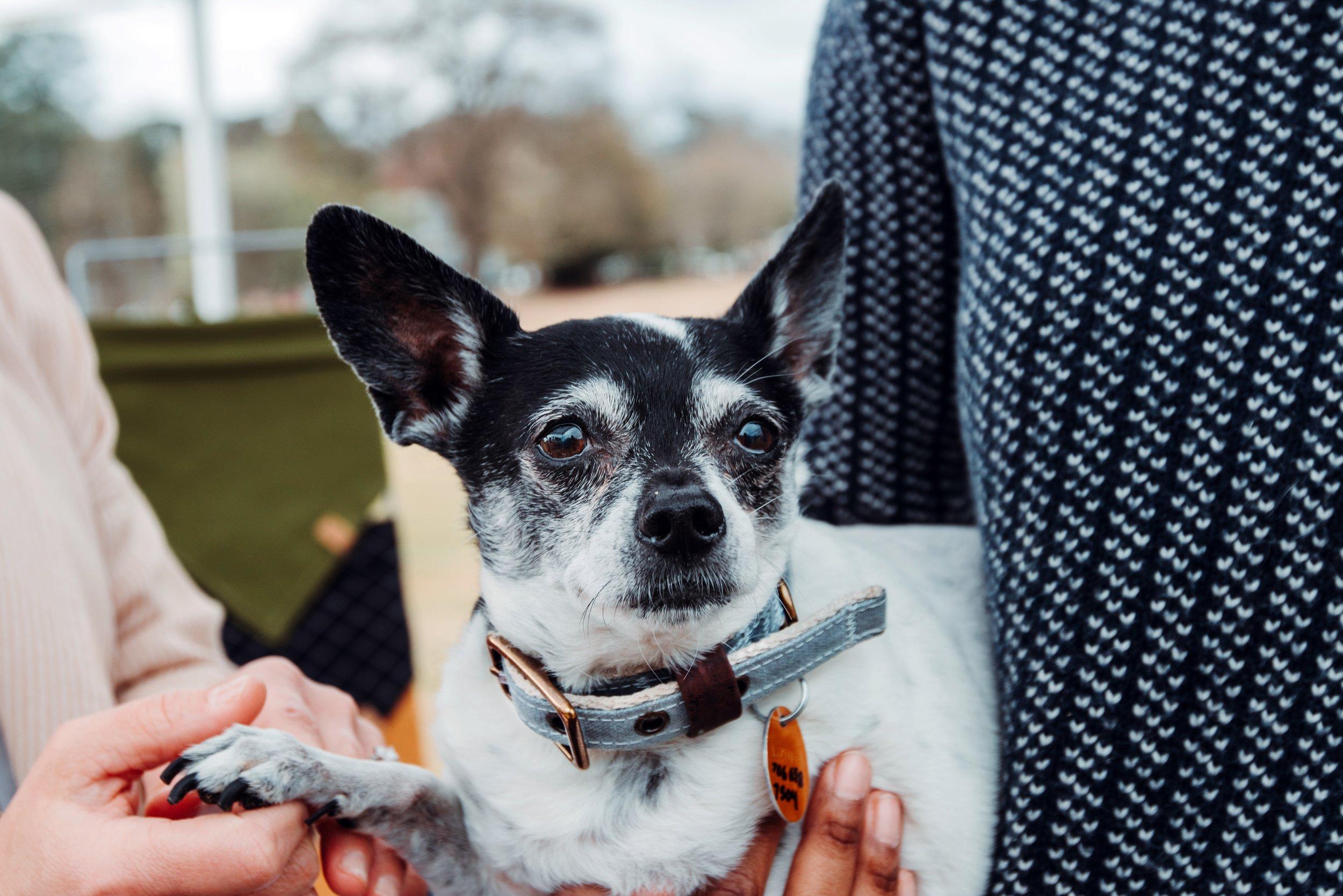 Atlanta Rescue Dog Games