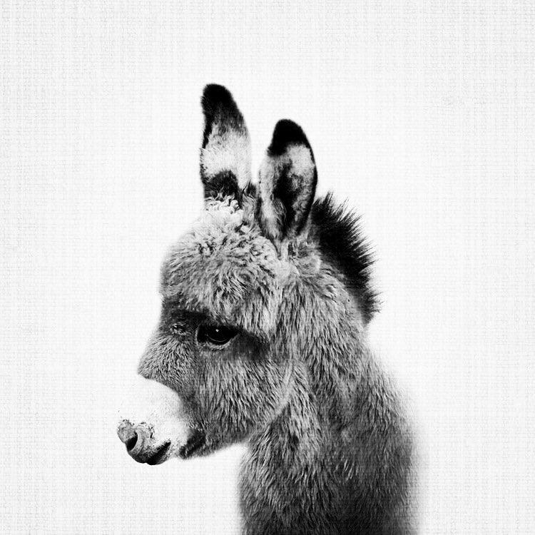 A Little Donkey.JPG