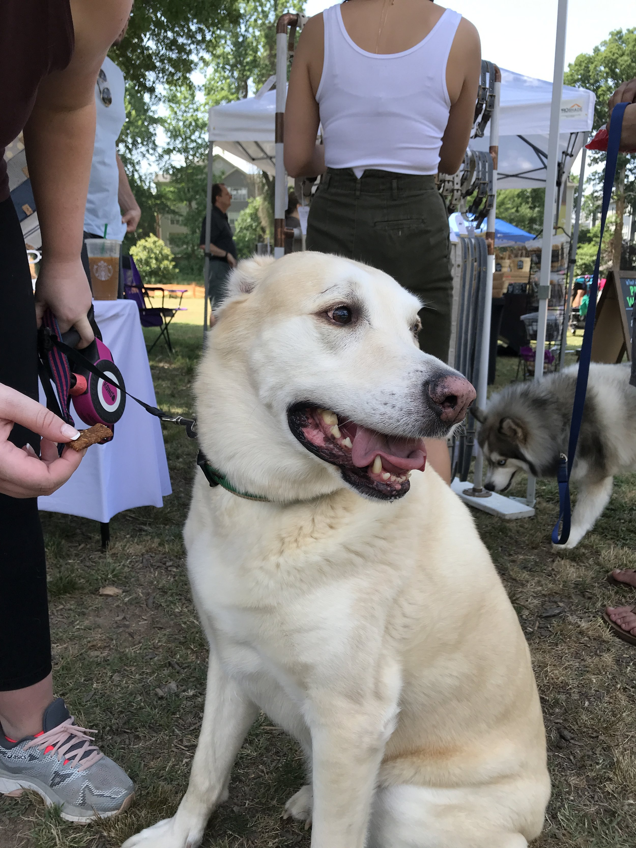 Dog friendly events