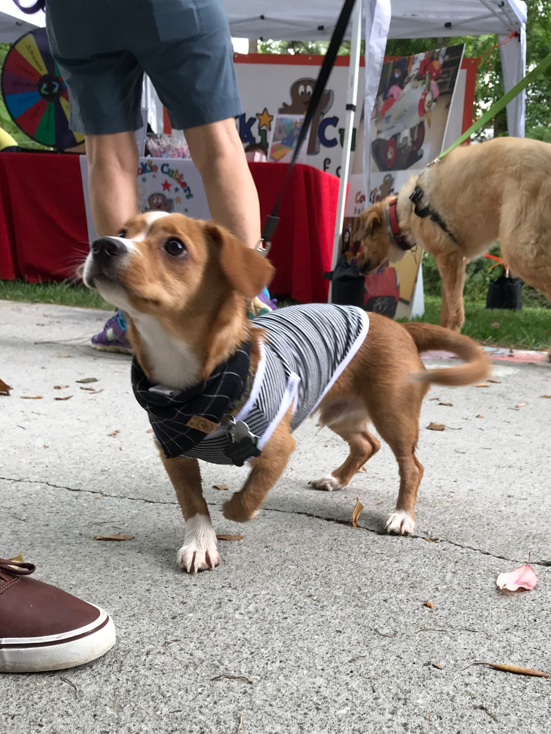 Atlanta Rescue Dog Events