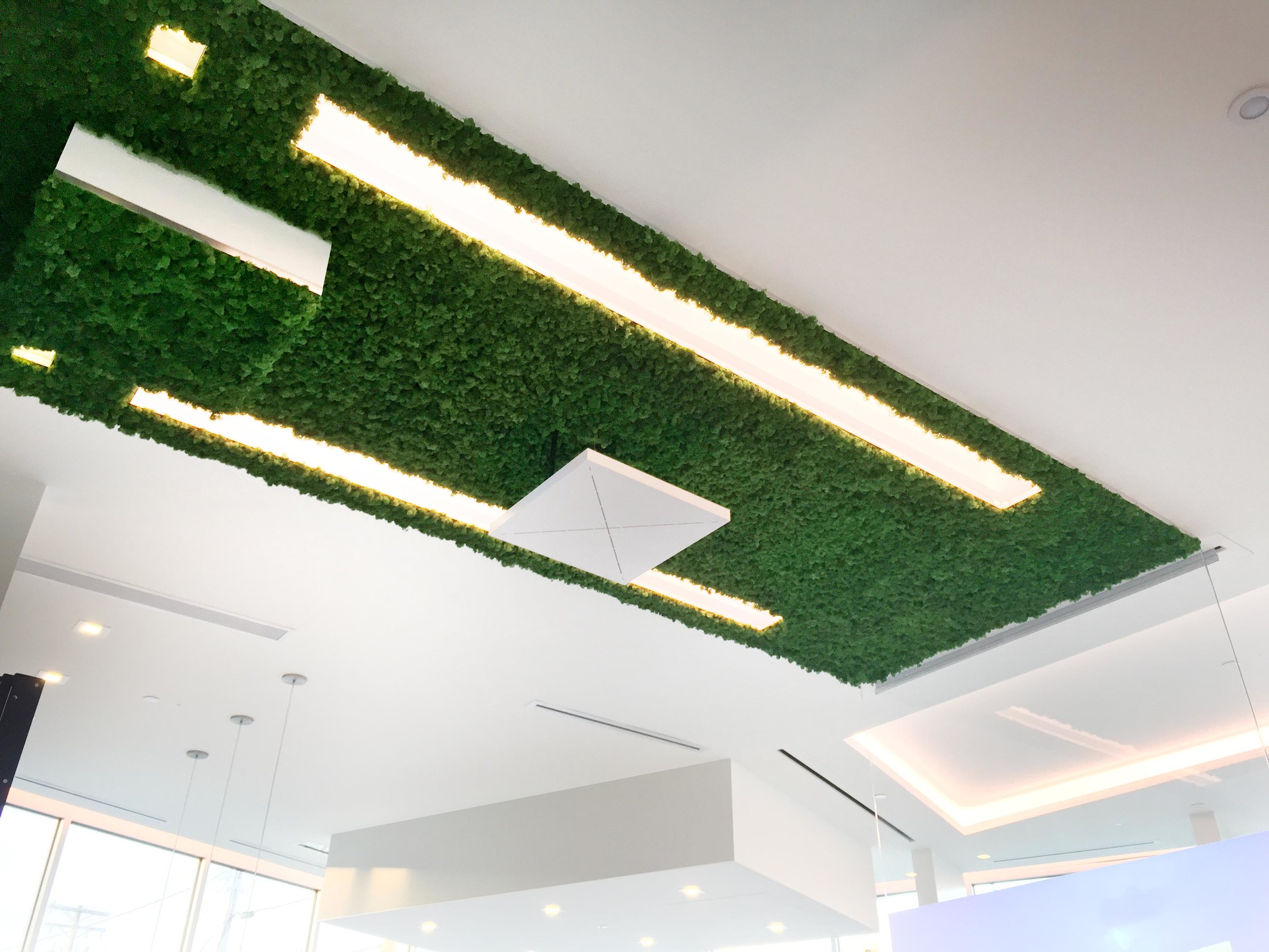 An architectural moss ceiling above the meeting table is an acoustic surface that doubles as an eye-catching swath of greenery.