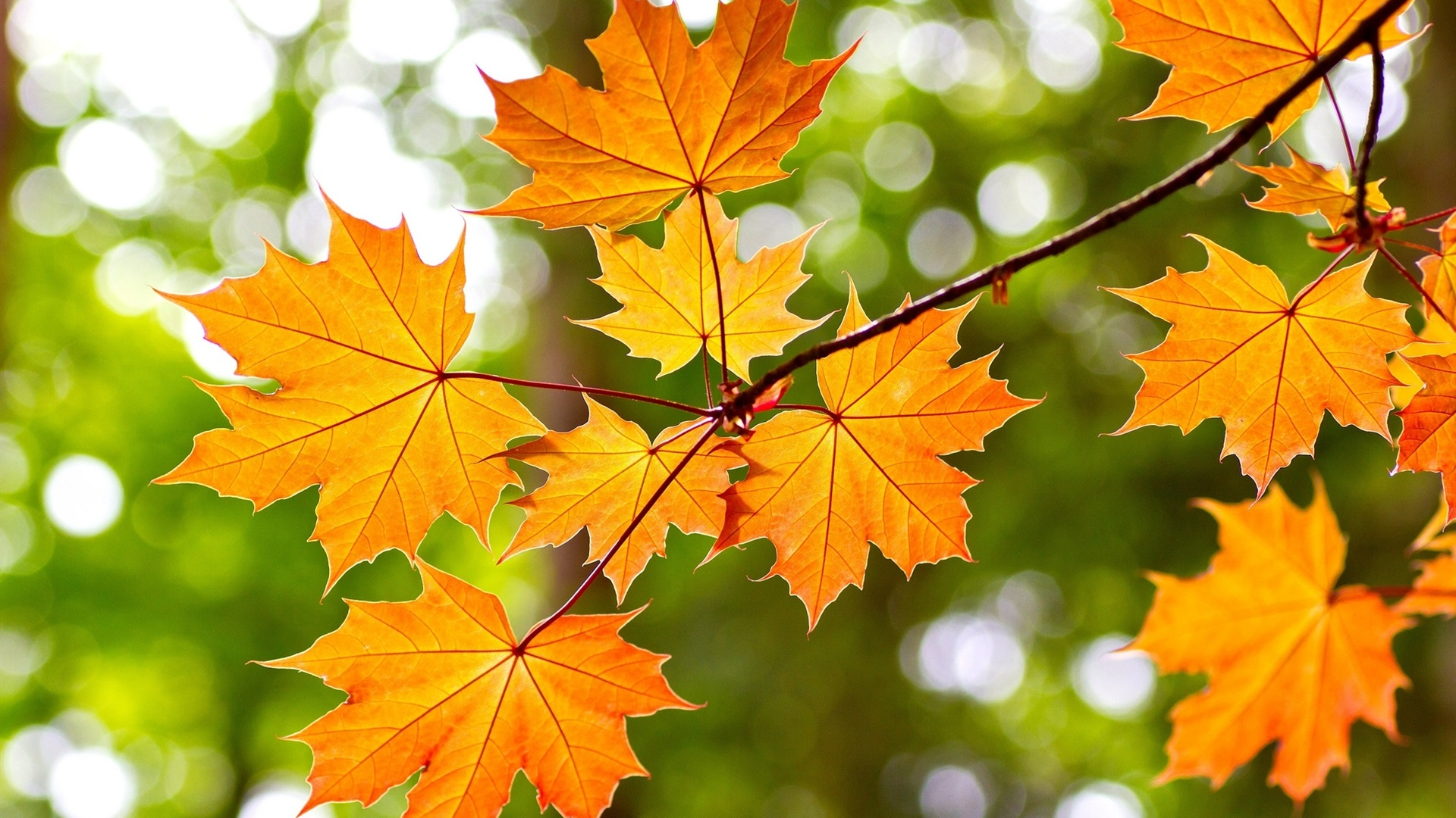 """Picture of yellow leaves and quote: """"And so with the sunshine and the great bursts of leaves growing on the trees, just as things grow in fast movies, I had that familiar conviction that life was beginning over again with the summer.""""  ― F. Scott Fitzgerald, The Great Gatsby"""