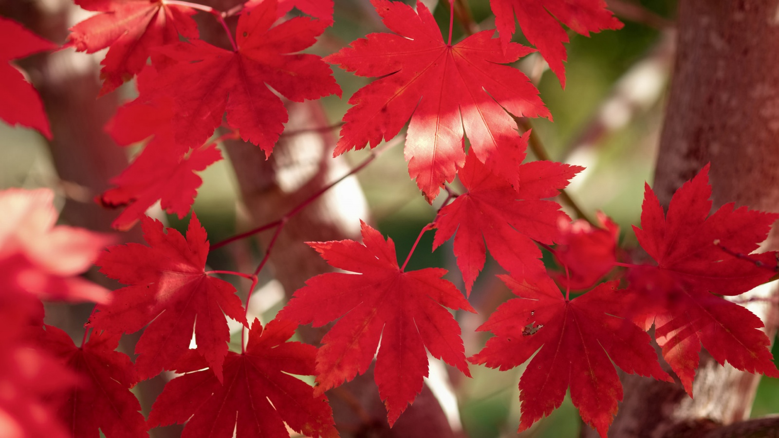 """""""How beautiful the leaves grow old. How full of light and color are their last days."""" James Burroughs"""