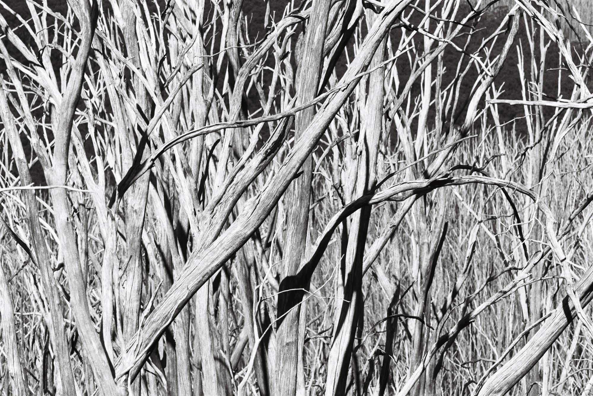 Trees of Lake Mountain, Victoria - 2018