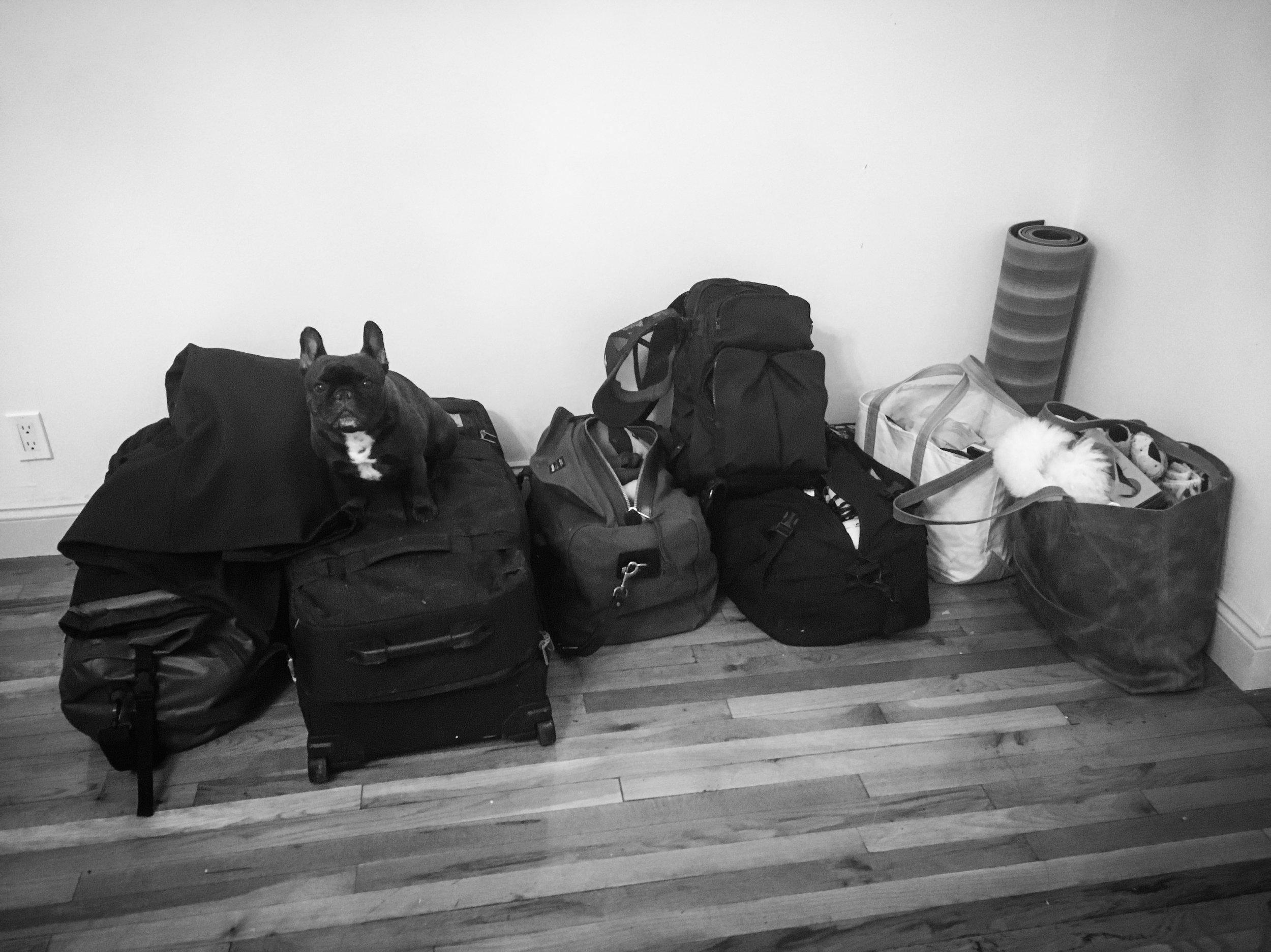 Bear on Bags 10.31.18