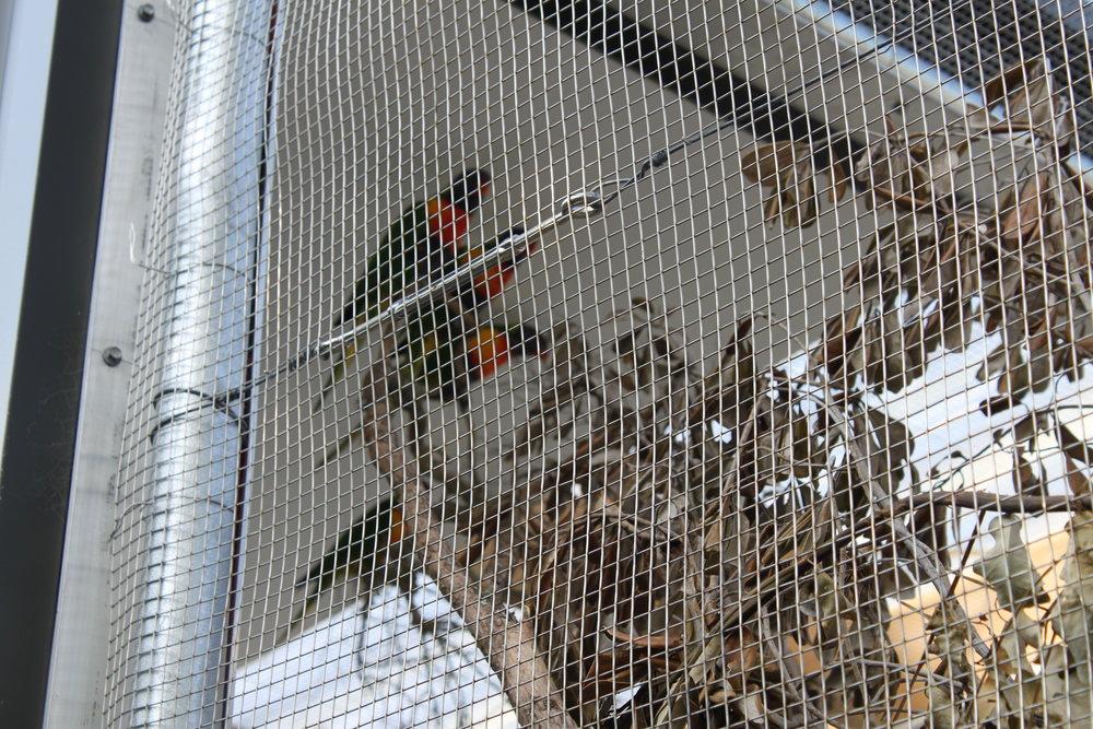 hampden_auckland_zoo_birds_1.jpg