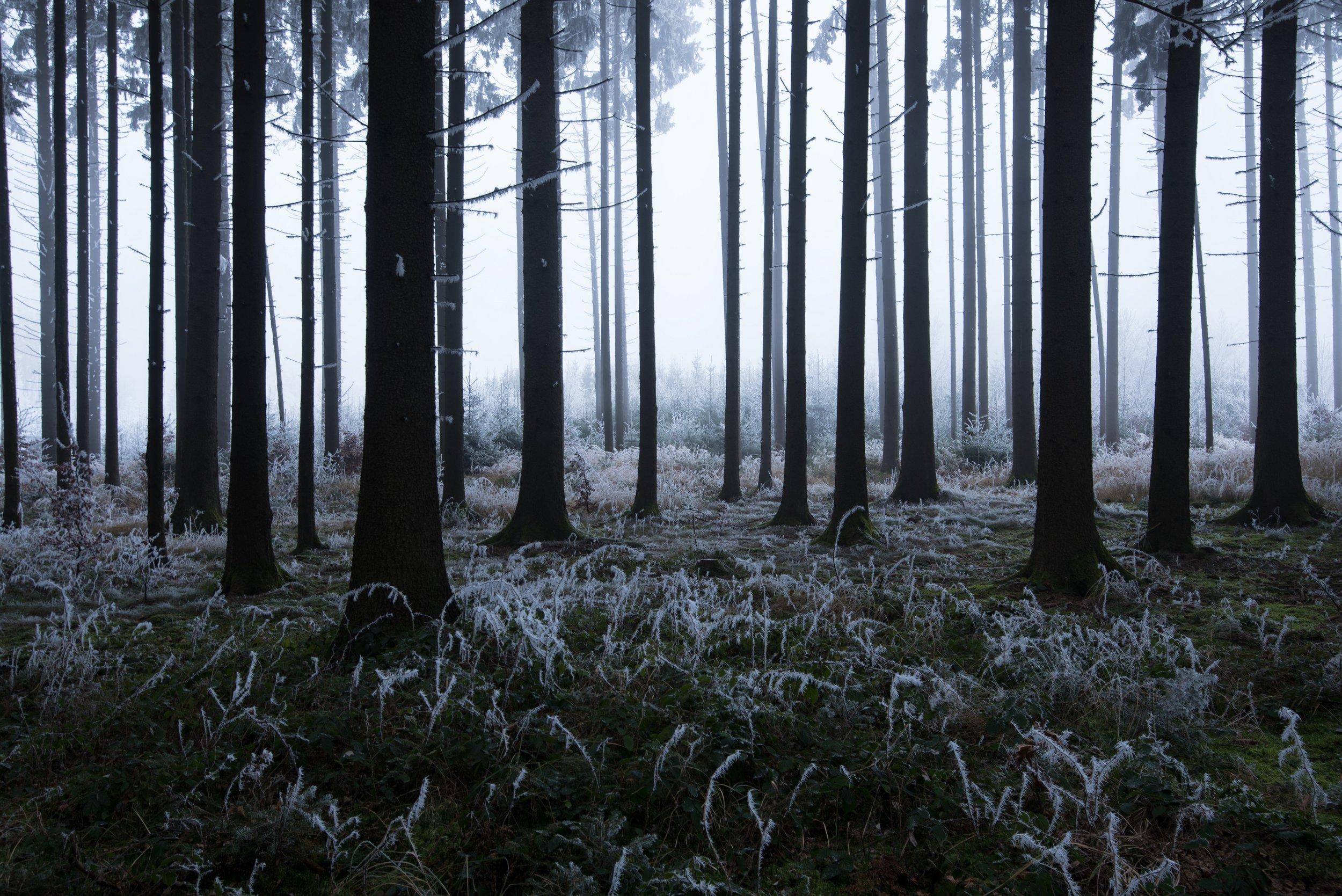 Bastian_Werner_Seminar_Winterlandschaft_photo19_1.jpg