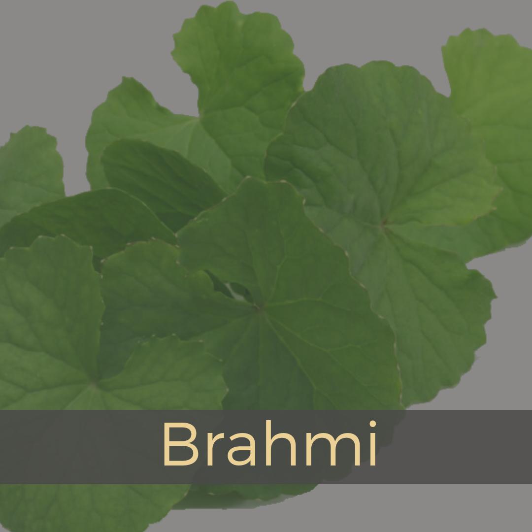 Brahmi.png