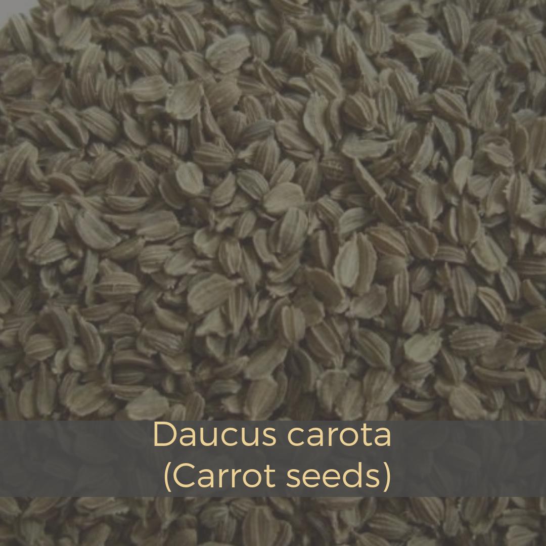 carrot-seeds-2350428.jpeg
