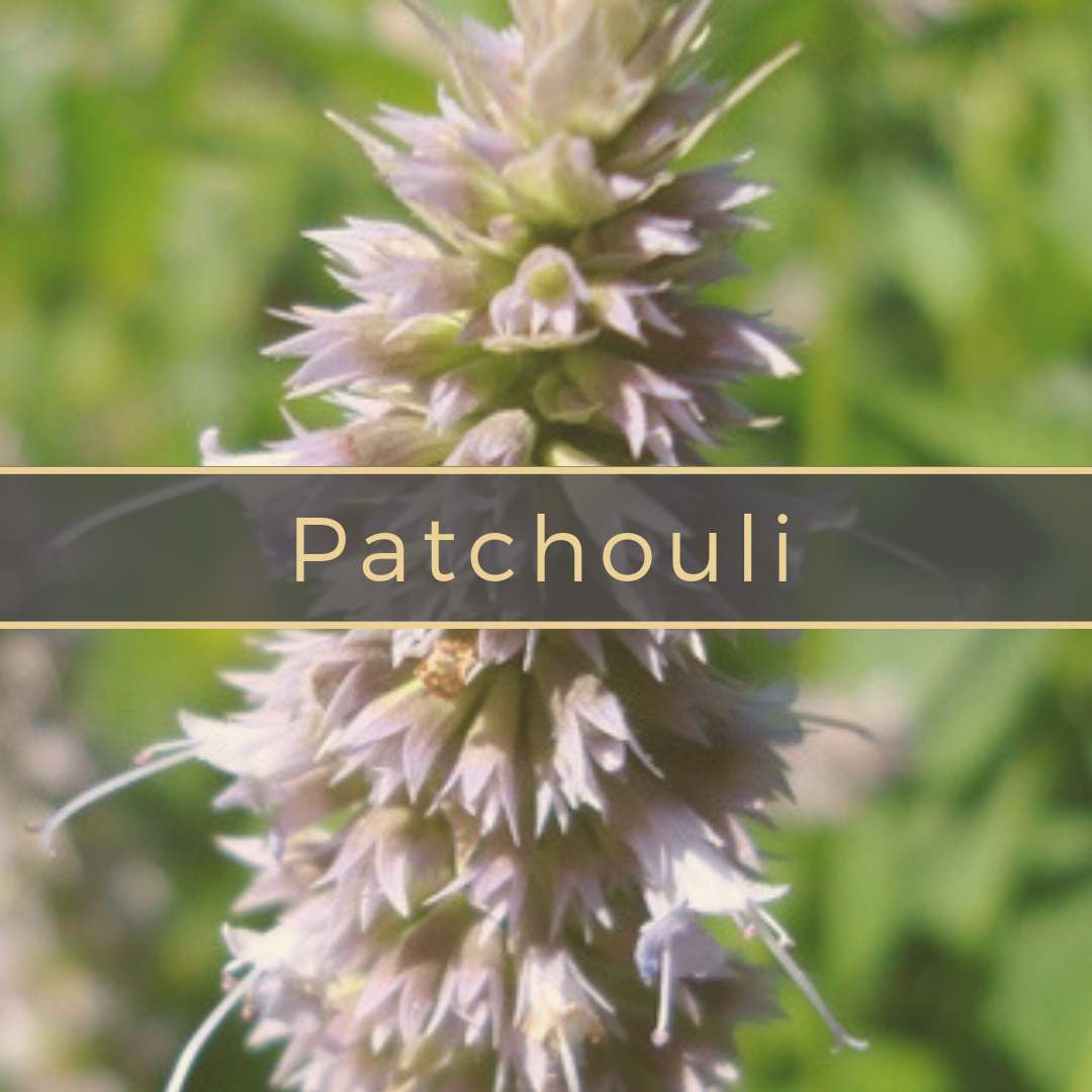 patchouli Gerson Institute of Ayurvedic Medicine.png