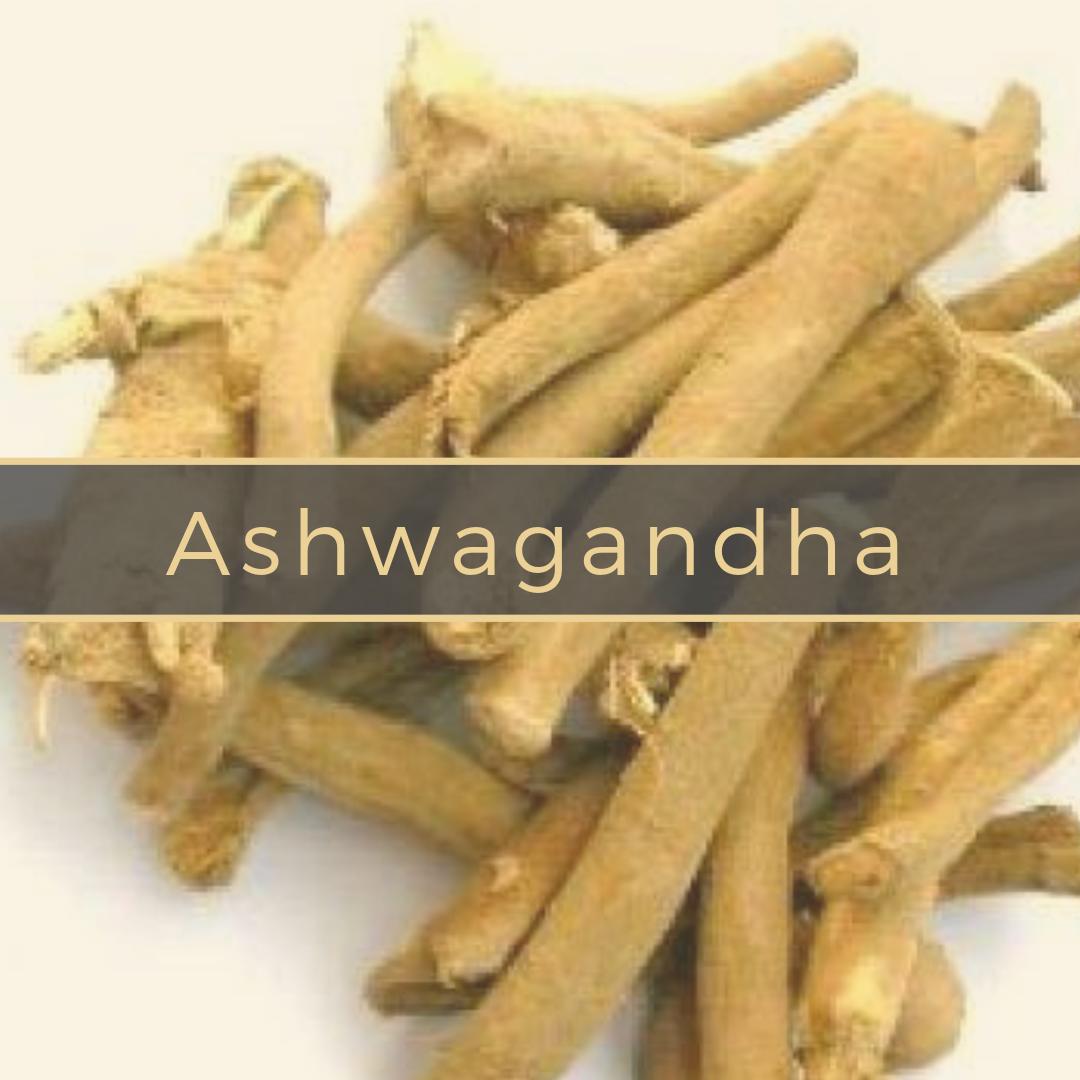 ashwagandha Gerson Institute of Ayurvedic Medicine (1).png