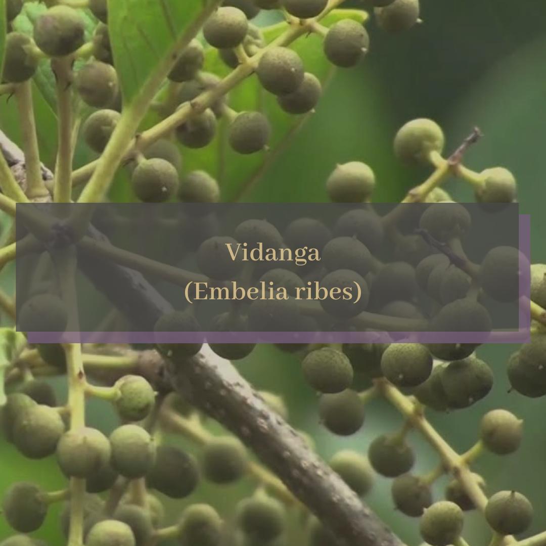 Vidanga (Embelia ribes).png