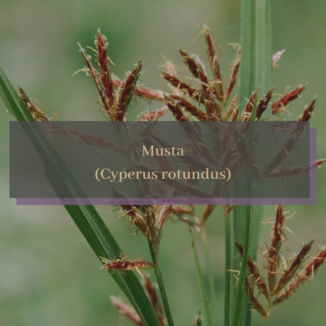 Musta (Cyperus rotundus).png