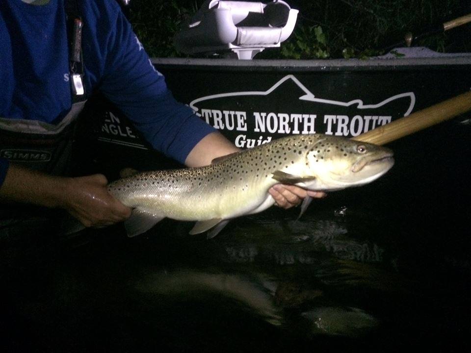 "A 29.5"" brown caught by one of Brian's guided trips!"